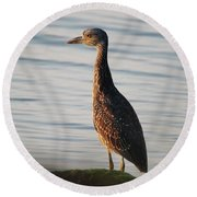 Immature Black-crowned Night-heron Mt Sinai New York Round Beach Towel