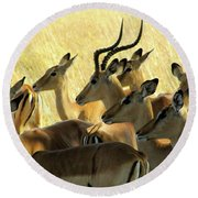 Impalas In The Plains Round Beach Towel