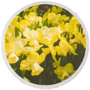 Impressions Of Gardens - Golden Daffodil Blooms Round Beach Towel