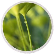 Round Beach Towel featuring the photograph In A Forest Of Spurge  by Connie Handscomb