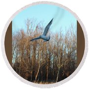 Round Beach Towel featuring the photograph In Flight by Melinda Blackman