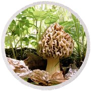 In Hiding - Morel Mushroom Round Beach Towel by Angie Rea