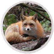 In Hiding Red Fox Round Beach Towel
