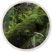 Round Beach Towel featuring the photograph In The Cool Of The Forest by Mike Eingle