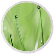 In The Grass Round Beach Towel by Rebecca Cozart