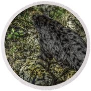 In The Shadows Black Bear Round Beach Towel