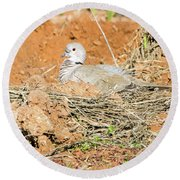 Round Beach Towel featuring the photograph Eurasian Collared Dove On Nest by Tam Ryan