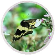 Incoming Butterfly Round Beach Towel