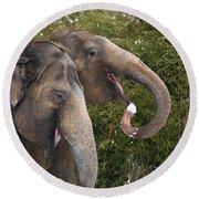 Indian Elephants Eating Snow Round Beach Towel