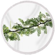 Indian Needle Bush Tree Leaves Round Beach Towel