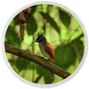 Indian Paradise Flycatcher Round Beach Towel