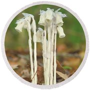 Indian Pipes Round Beach Towel