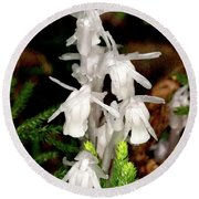 Round Beach Towel featuring the photograph Indian Pipes On Club Moss by Meta Gatschenberger