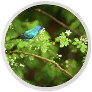 Indigo Bunting And Black Berry Blooms Round Beach Towel by Darren Fisher