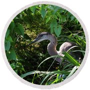 Injure Blue Heron Round Beach Towel by Donna Brown