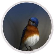 Inquisitive Bluebird Round Beach Towel