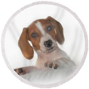 Round Beach Towel featuring the photograph Inquisitive Dachshund by David and Carol Kelly