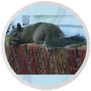 Round Beach Towel featuring the photograph Inquisitor Visitor by Denise Fulmer