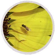Round Beach Towel featuring the photograph A Bug's Life by Nikki McInnes