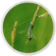 Round Beach Towel featuring the photograph Insect On Straw, May 2016.  by Leif Sohlman