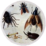 Insects, 1660 Round Beach Towel