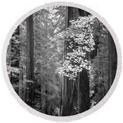 Inside The Groves Of The Redwoods Round Beach Towel by Craig J Satterlee