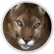 Intense Cougar Round Beach Towel