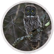 Intensity - Great Gray Owl Round Beach Towel
