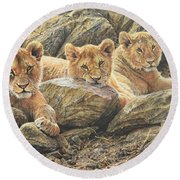 Round Beach Towel featuring the painting Interrupted Cat Nap by Alan M Hunt