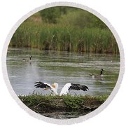 Round Beach Towel featuring the photograph Into The Water by Alyce Taylor