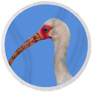 Round Beach Towel featuring the photograph Intriguing Ibis .png by Al Powell Photography USA