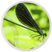 Iridescent Green And Blue Dragonfly Profile Round Beach Towel