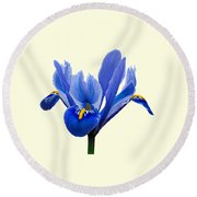 Round Beach Towel featuring the photograph Iris Recticulata Transparent Background by Paul Gulliver