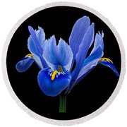 Round Beach Towel featuring the photograph Iris Reticulata, Black Background by Paul Gulliver