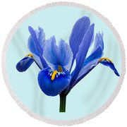 Round Beach Towel featuring the photograph Iris Reticulata Blue Background by Paul Gulliver