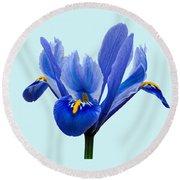 Iris Reticulata Blue Background Round Beach Towel