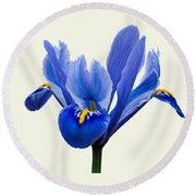 Iris Reticulata, Cream Background Round Beach Towel by Paul Gulliver