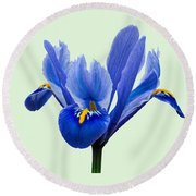 Round Beach Towel featuring the photograph Iris Reticulata, Green Background by Paul Gulliver