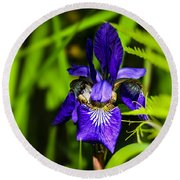 Round Beach Towel featuring the photograph Iris Versicolor by Mark Myhaver