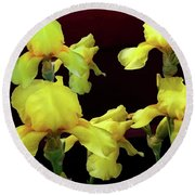 Round Beach Towel featuring the photograph Irises Yellow by Jasna Dragun