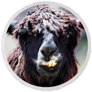 Round Beach Towel featuring the photograph Is Your Mama A Llama? by Anthony Jones