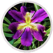 Round Beach Towel featuring the photograph Island Iris 2 by Penny Lisowski