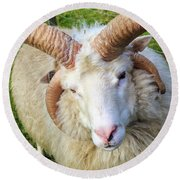 Islandic Sheep With Two Sets Of Horns Round Beach Towel by Allan Levin