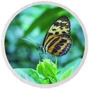 Ismenius Butterfly Round Beach Towel
