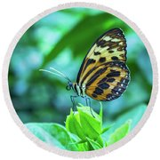 Ismenius Butterfly Round Beach Towel by Steven Parker