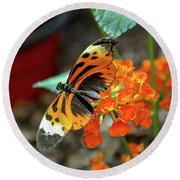 Ismenius Tiger Butterfly Round Beach Towel
