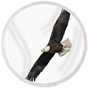 Isolated American Bald Eagle 2016-3 Round Beach Towel