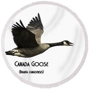 Isolated Canada Goose 2015-1 Round Beach Towel