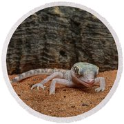 Round Beach Towel featuring the photograph Israeli Sand Gecko - 1 by Nikolyn McDonald