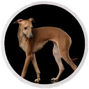 Italian Greyhound Dog Standing  Isolated Round Beach Towel